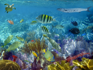 The glorious Marine life of the Bahamas