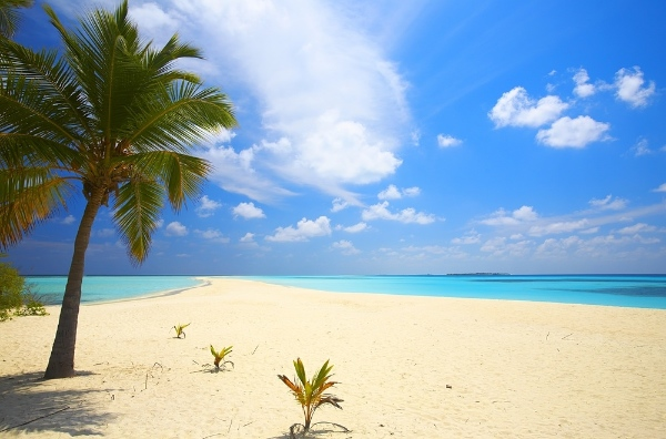 Palm Beach Malediven Schnorcheln