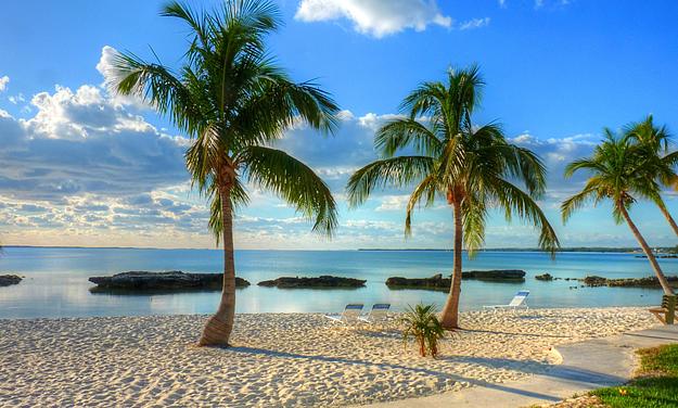Bahamas Beach Palm Trees