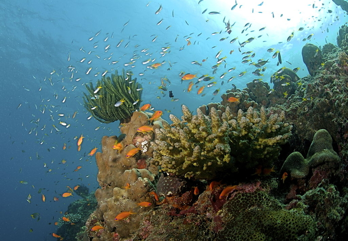 dive1 Coral_Reef_Andamans