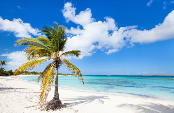 Explore the beaches of the Bahamas!