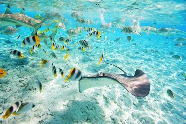 divingfrenchpolynesia1.jpegfb052e