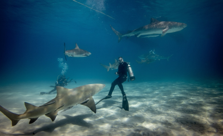 Diving charters with boatbookings