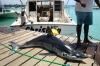 Fishing Boat CHRISTINA - Speville Craft - Fishing boat - Mauritius
